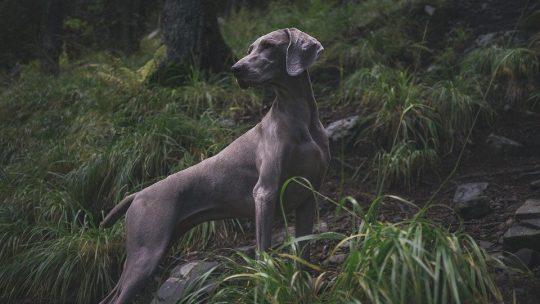 Pour les amoureux de la chasse et de la nature, voici venues les meilleures caméras de chasse